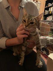 Marla Katze aus dem Tierschutz