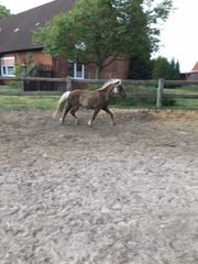 Classic-Pony-Wallach