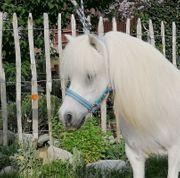 Shettys Ponys Freizeitpferde