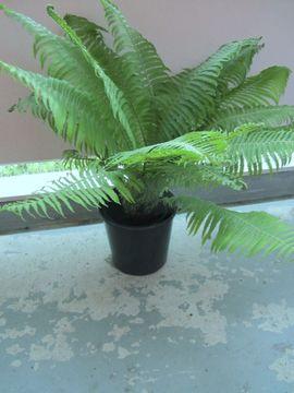 Pflanzen - Stockrosen Farn Buxus Campanula Glockenblumen