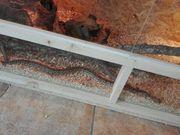2 Madagaskar Boas mit Terrarium