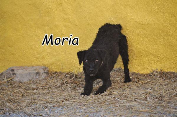 Darf Moria Sie von ihrer