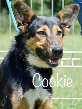 Cookie (Rüde aus dem Tierschutz) sucht ein Zuhause