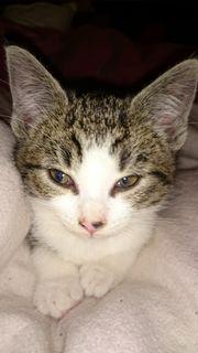 kleine Katze Mia mit Zubehör