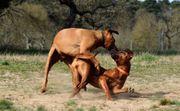 Hundverhaltenstherapeut Ausbildung - Hundepsychologie
