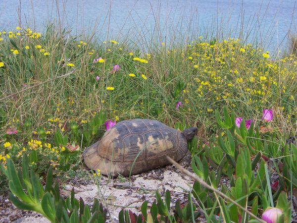 Landschildkröten STAMMTISCH Weil der Stadt