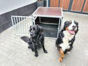 Hundetransportbox Alu und Holz 80x90x65
