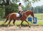 Reitbeteiligung - Reiter sucht Pferd