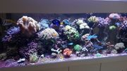 Meerwasseraquarium Komplet