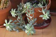 Zimmerpflanzen diverse Jungpflanzen und oder
