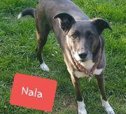 Nala- neues liebevolles Zuhause gesucht