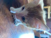 Biete 2 Katzenbabys