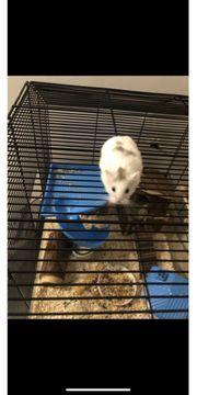 Zwerg Hamster Käfig und viel