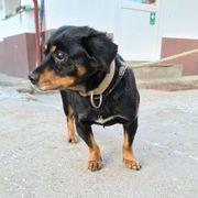 Blinder Hundeopa Mokus sucht Seelenpartner