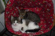 2 süße verspielte Katzenkinder 12