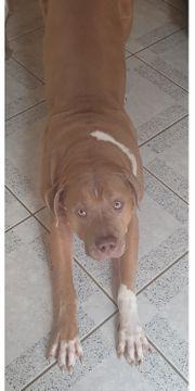 Hund sucht dringend neues zuhause