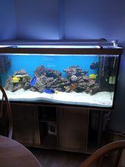 Meerwasseraquarium Komplett mit Technik und Inhalt1000