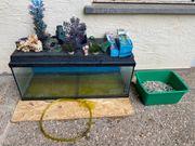 Komplettes Aquariumset Billig