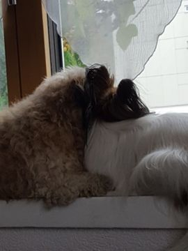 Tierbetreuung - gegenseitige Hundebetreuung