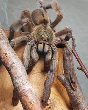Wir suchen folgende Spinnen 1