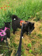 Hundezubehör Sicherheitsgeschirre gesucht