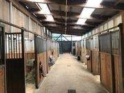 Offenstall und Pferdeboxen in Traumlage