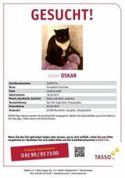 Suche meinen Kater Oskar