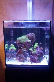 zurück Red Sea Nano Reefer