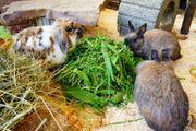 Hilfe Beratung artgerechte Haltung Kaninchen