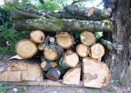 Holz vom Kirschbaum Kirschbaumholz: Kleinanzeigen aus Bobenheim - Rubrik Holz