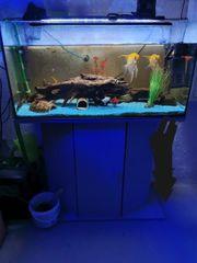 Aquarium 120l mit Unterschrank