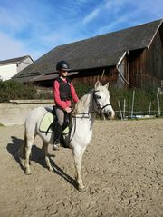 Reitpony Pony Pferd Reitpferd Freizeit