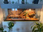 Terrarium Komplett mit Bartagame und