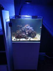 Komplettes 170l Meerwasseraquarium