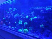 Komplettes Meewasser Aquarium 450 Liter