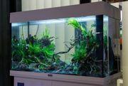 Suche Komplette Aquarium und Fische