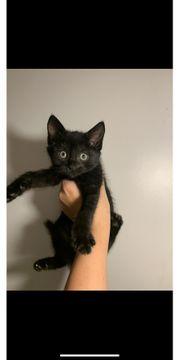 Katzen aus einer Beschlagnahmung suchen