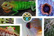 Privater Tierversand - Reptilien Amphibien