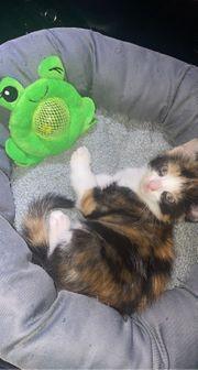 Die kleine katze muss dringend