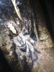 Nehme Reptilien und Amphibien auf