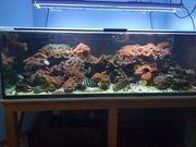 Einrichtung Meerwasserbecken - Korallen und Steine