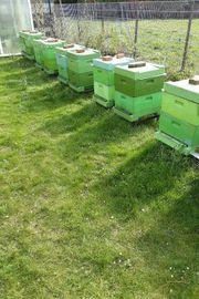 Bienen Völker