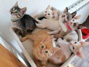 5 - Kätzchen