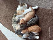 Süsse Kätzchen suchen ein liebevolles