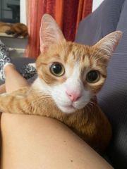 Liebe Katzengeschwister - nur zusammen abzugeben