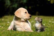 Liebevolle Katzen Hundebetreuung