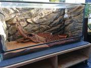 Verkaufe ein Terrarium mit Unterschrank