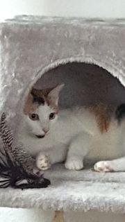 5 Monate junge Katzendame sucht