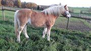 Pferd sucht zweibeinigen Freund