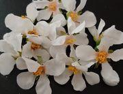 Kirschblüten - Streudeko - Basteln
